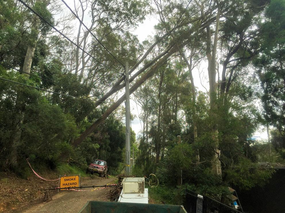 Trees down along Robertson Road